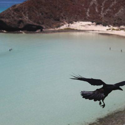 Crow Pose (Kakasana), Yoga, asanas
