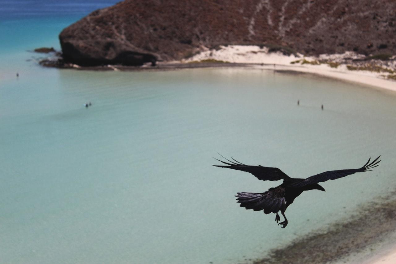 Crow Pose (Kakasana)